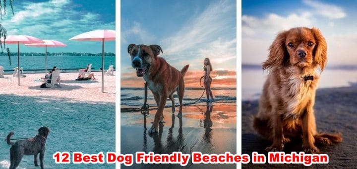 14 Best Dog Friendly Beaches and Parks in Michigan
