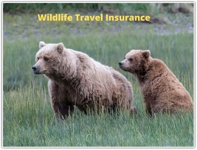 Wildlife Travel Insurance