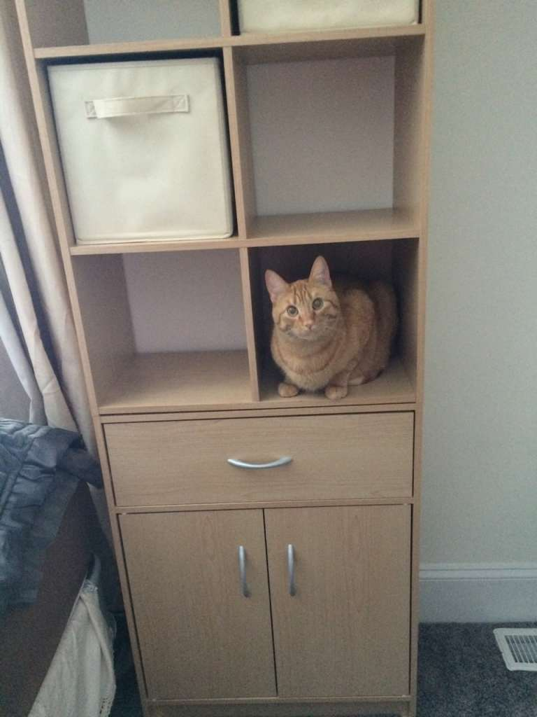 Cats and moving