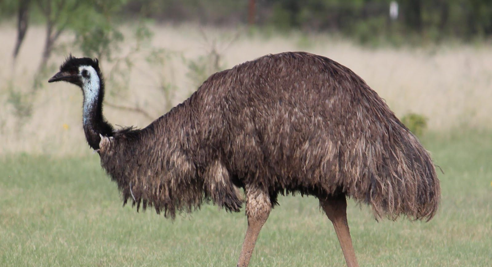Hide from Amy the Easter Emu