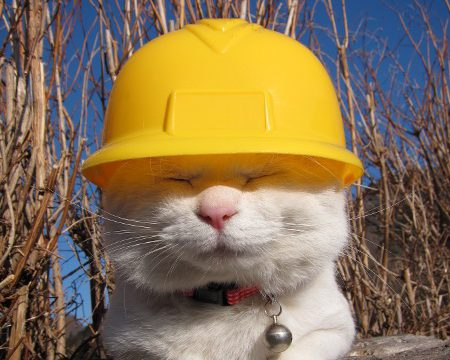 2039 - Employ Breezeway Cats to Finish Construction