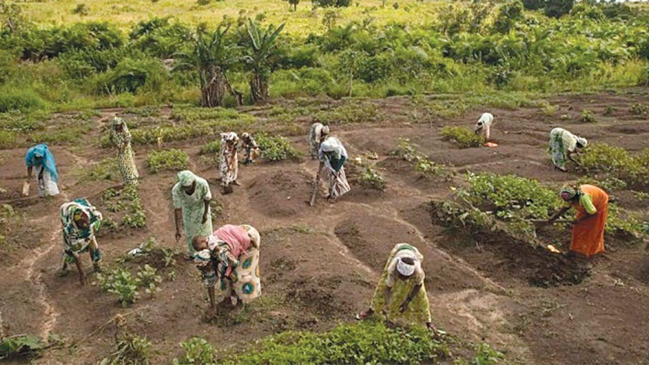 OSACA seeks govt intervention on food production