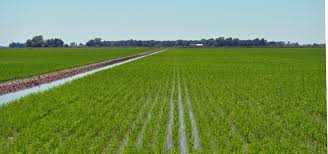 Rice production: We can surpass other states –Ondo farmers