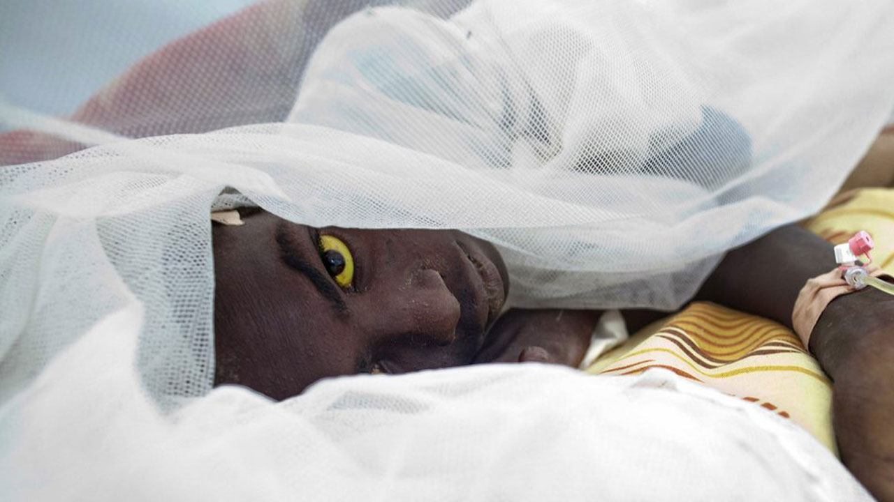 Yellow Fever outbreak: Ondo warns residents