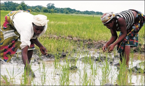Direct investment 'll boost agric – OSACA boss