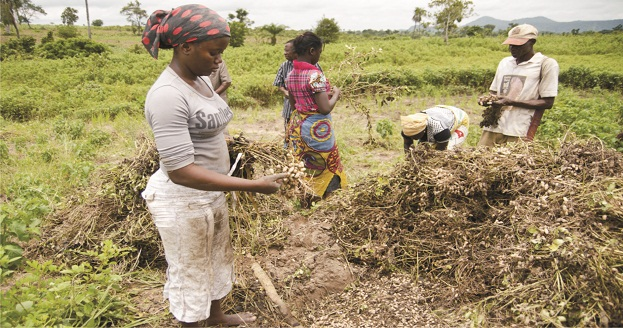 Osun Poly to establish department of Agric