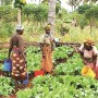 'Agric,veritable panacea for youth unemployment'