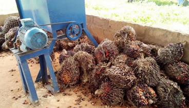 'Oil Palm Producers to benefit from N30b loan '