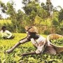 'Conduct farmers census'