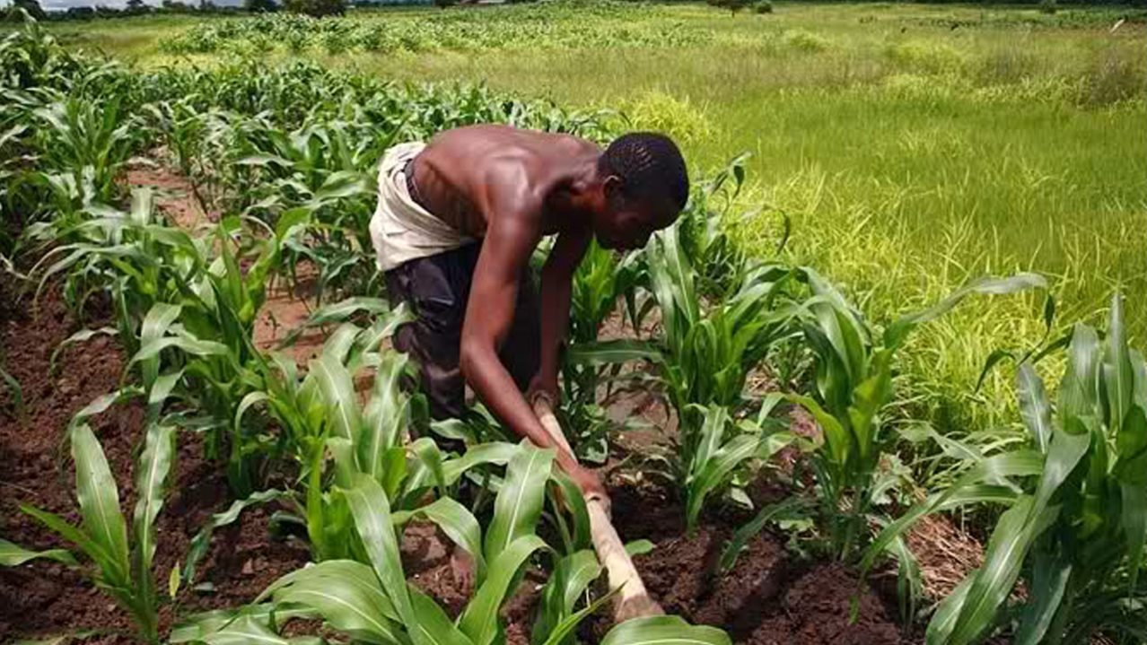 Nigeria's economy under threat, as agric products lack proper devt