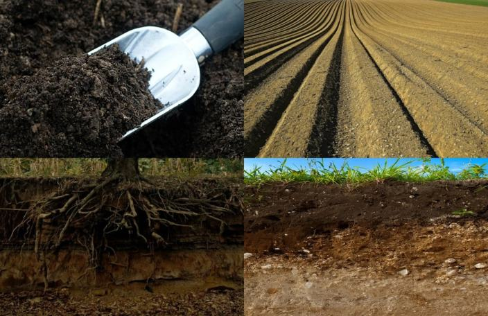 'Conduct soil test before planting'