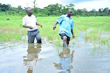 Flood: Govt to succour Ogbese farmers