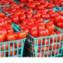 'Southwest can be self sufficient in tomato production'