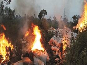 NDLEA destroys 15 tonnes of cannabis
