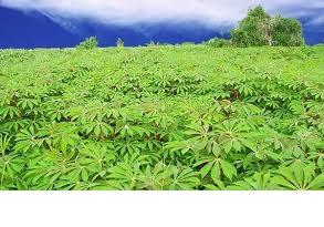 Farmers' pass, key to food sufficiency-Oladapo