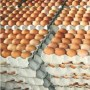 'Hike in egg price may linger'