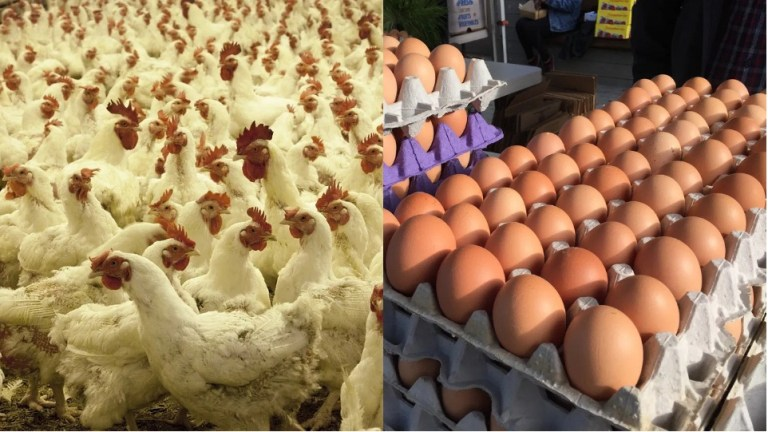 Expert urges poultry farmers on measures to protect birds