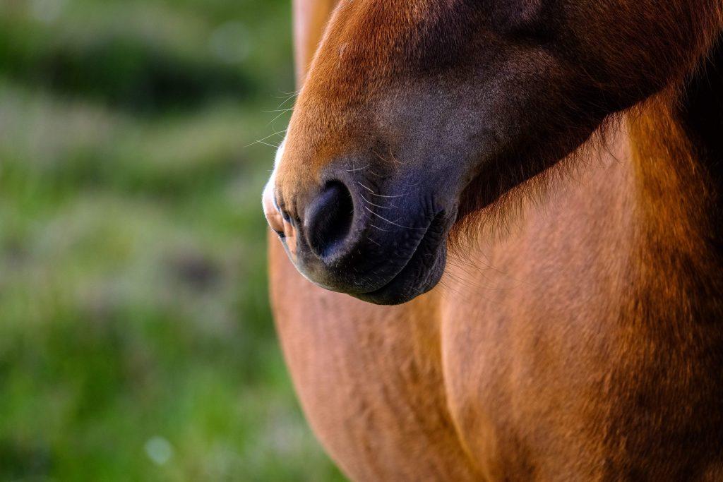 paarden-extensions-paardenextensions-horse