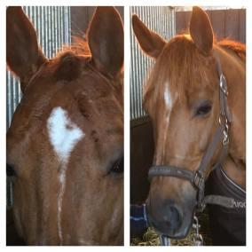 paarden-extensions-paardenextensions-toupet