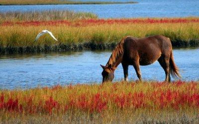 Paarden met paarden extentions