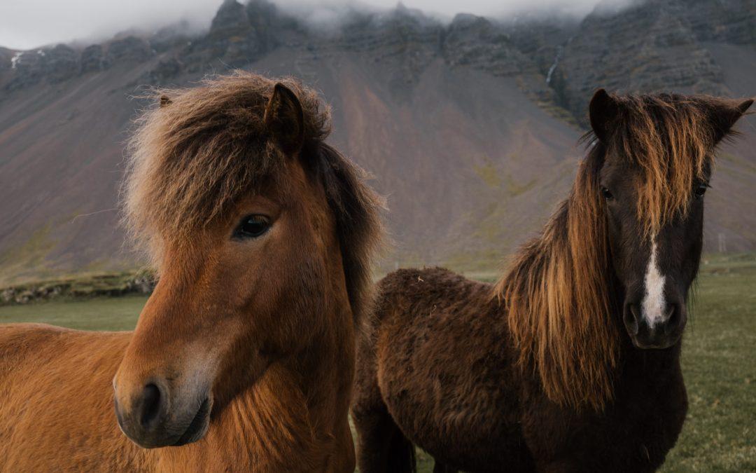 Staartproblemen, wat vertelt de staart van je paard je?