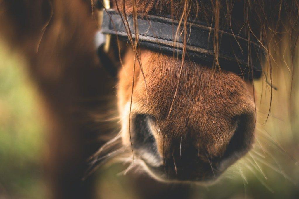 zelf-paardenextensions-plaatsen