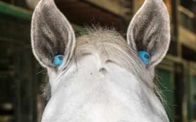 Beyond The 10 Irrefutable Laws Of Horsemanship