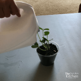 kid friendly watering can - thehotmesskitchen (10)