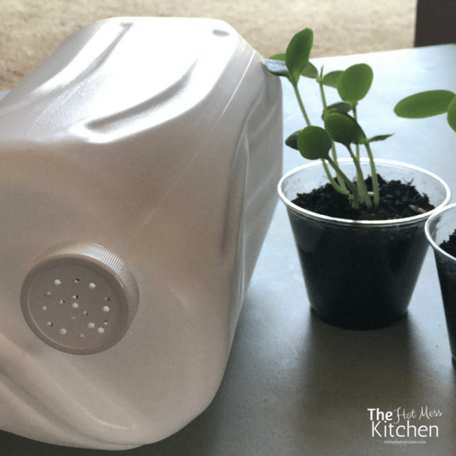 kid friendly watering can - thehotmesskitchen (9)