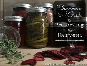 Beginner's Guide to Preserving the Harvest