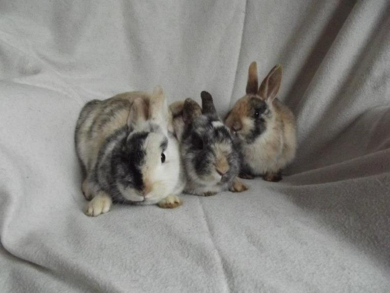 abandoned-rabbit