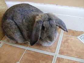 greif-rabbit