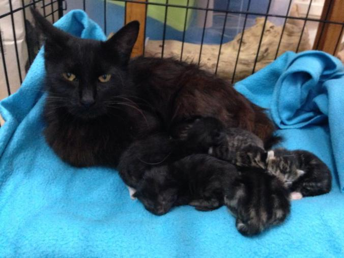 mother-cat-and-kittens