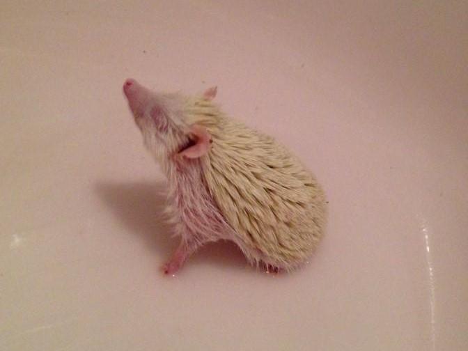 aph-bath