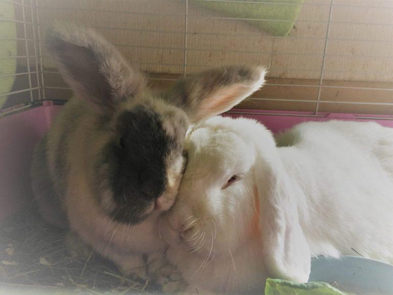 do-rabbits-need-to-be-neutered