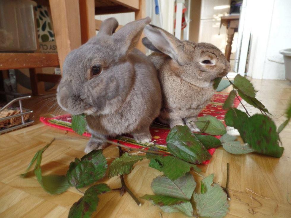 Safe Foods For Rabbits