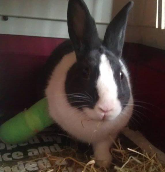 injured-rabbit
