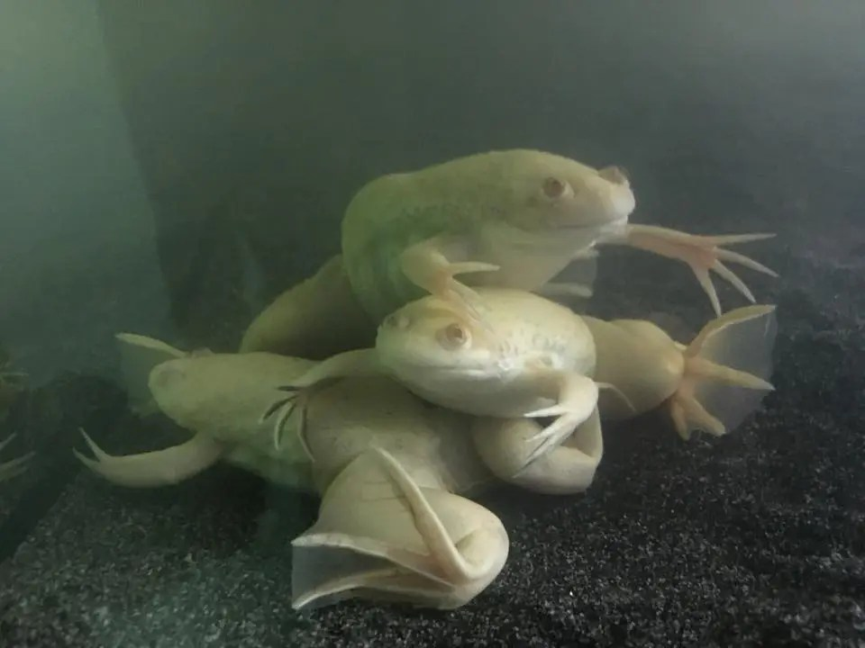 How To Move A Fish Tank, Amphibians And Axolotls