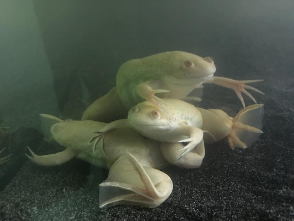 How To Move A Fish Tank, Amphibians And Axolotls