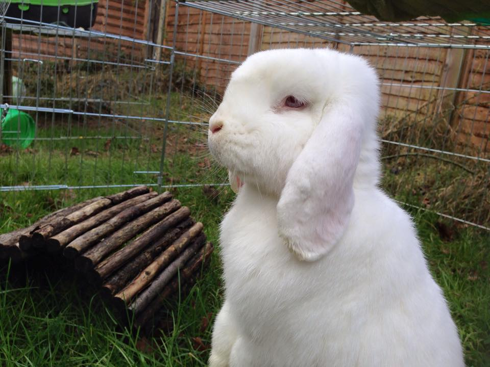 10 Signs Your Rabbit May Be Unwell