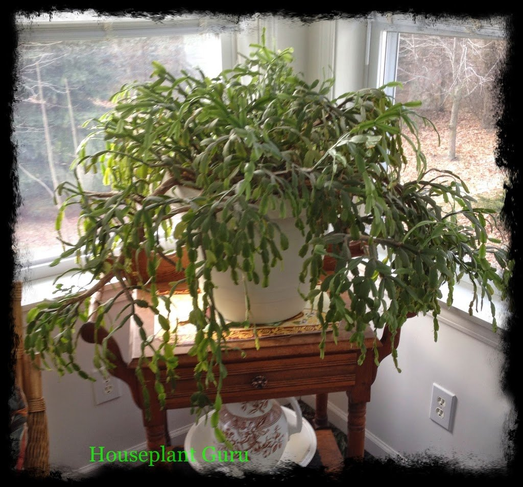 The Story Behind the Houseplant