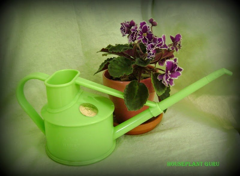 Watering Can Woes