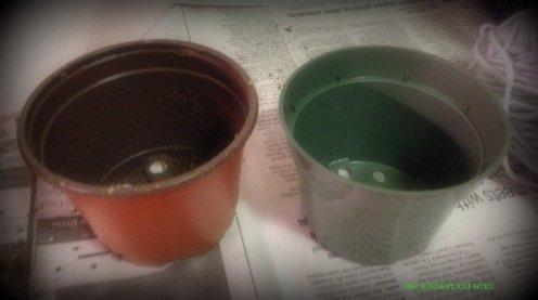 Azalea pots. Left-came in. Right-New pot