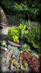 Many different succulents