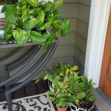 Pothos, zee zee plant, Philodendron 'Brazil'