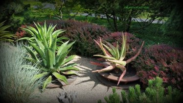 These aloes are amazing