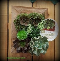 Small succulent wall