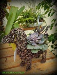 Succulent planted dog