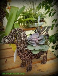 Succulent planted dog