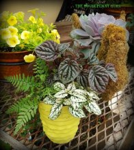 Mixed houseplant container